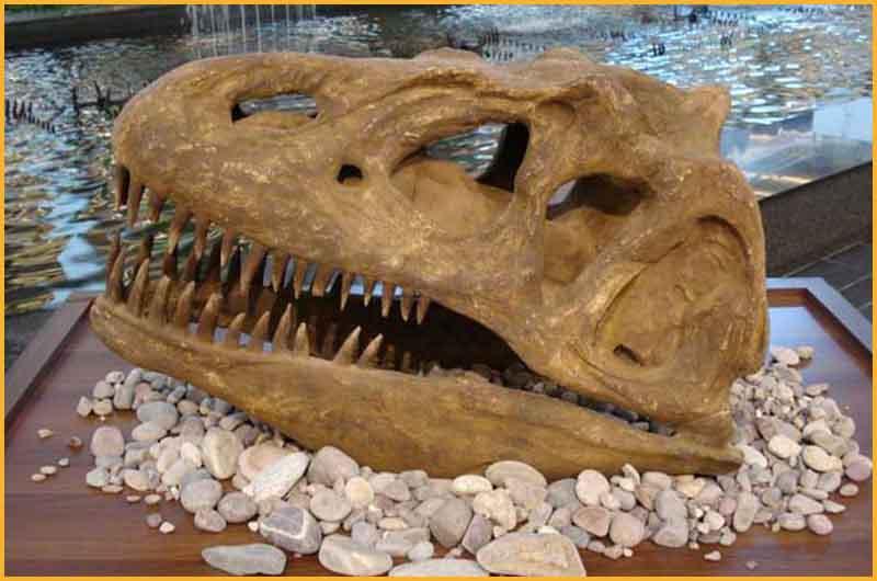恐龙头骨化石